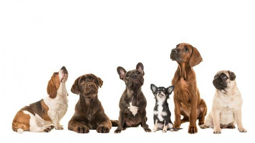 Adozione cani da Rescue - Le informazioni utili