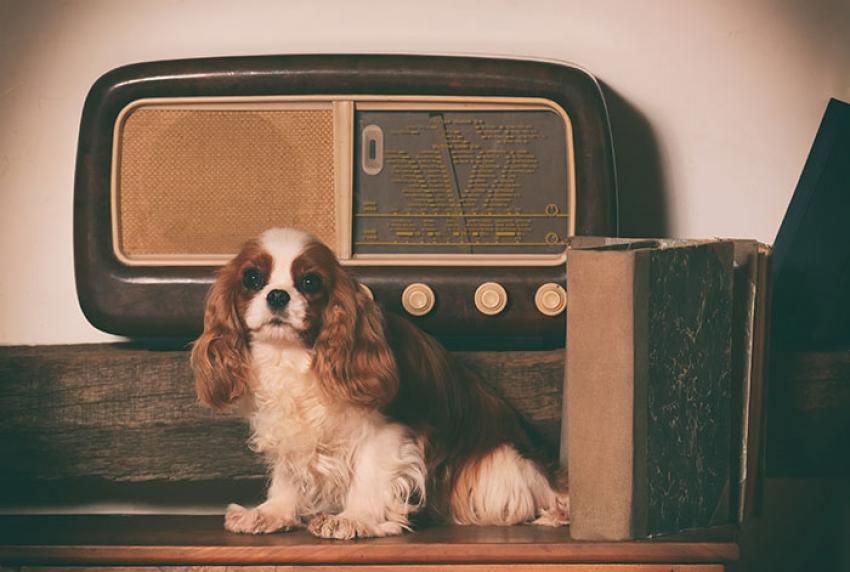 Che effetto ha la musica sui cani?