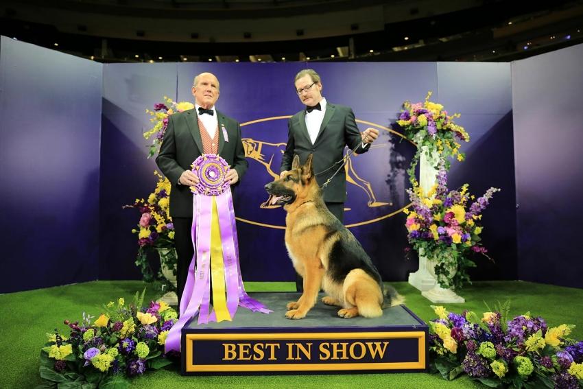 New York 10-13 febbraio: la 142° edizione del Westminster Kennel Club Dog Show, il Superbowl dei cani