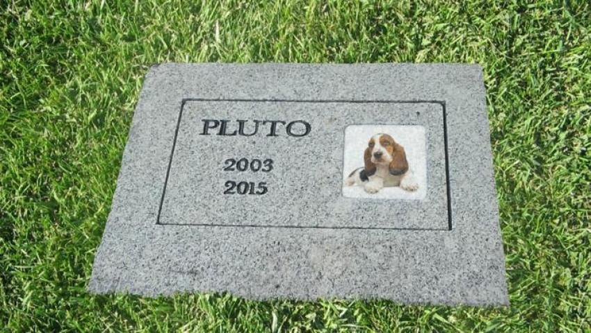 Cosa fare quando muore il cane? Come e dove seppellirlo? Ecco le risposte.