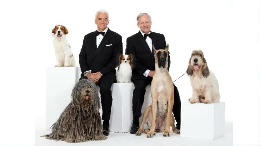 National Dog Show 2019 - Il 28 novembre si eleggerà il miglior cane