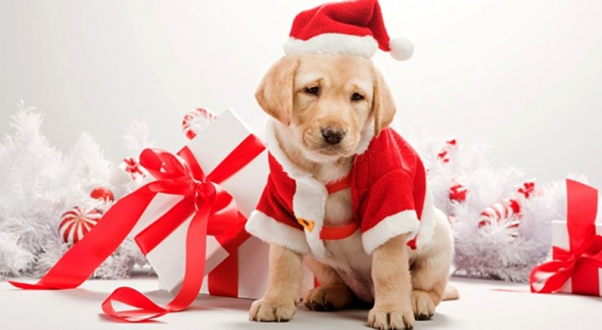 Natale: cosa regalare agli amanti dei cani? Ecco qualche idea!