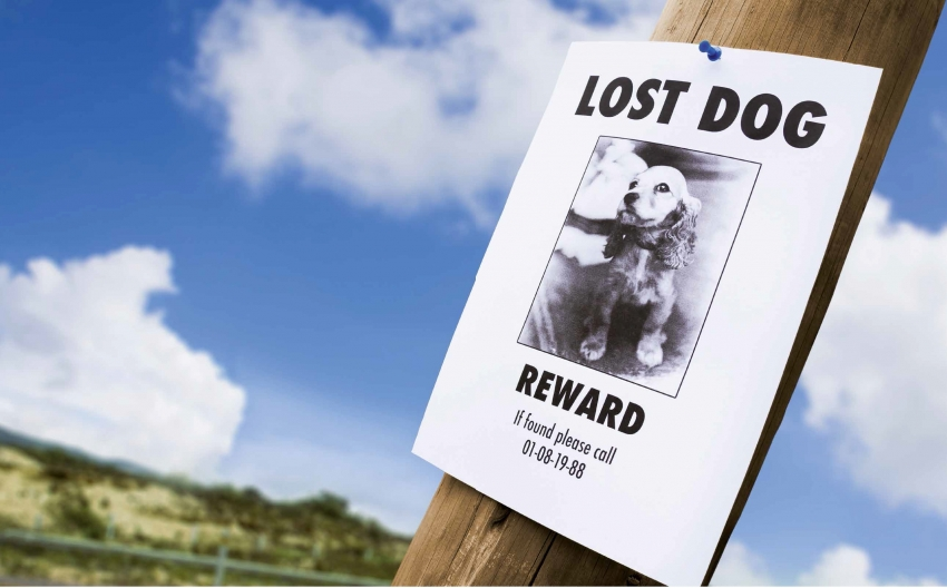 Aumento dei furti di cani, ecco le razze più a rischio