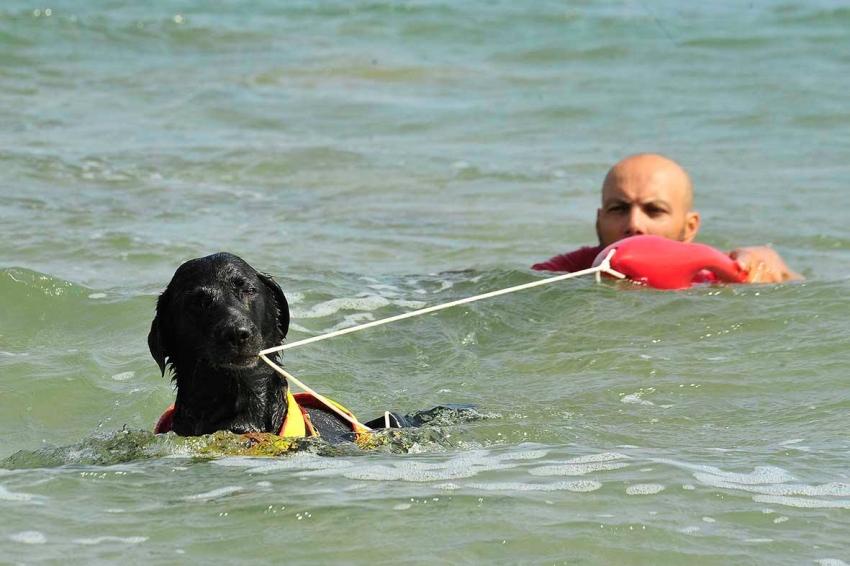 Cani da salvataggio, grande show ad Animalido (Fano)