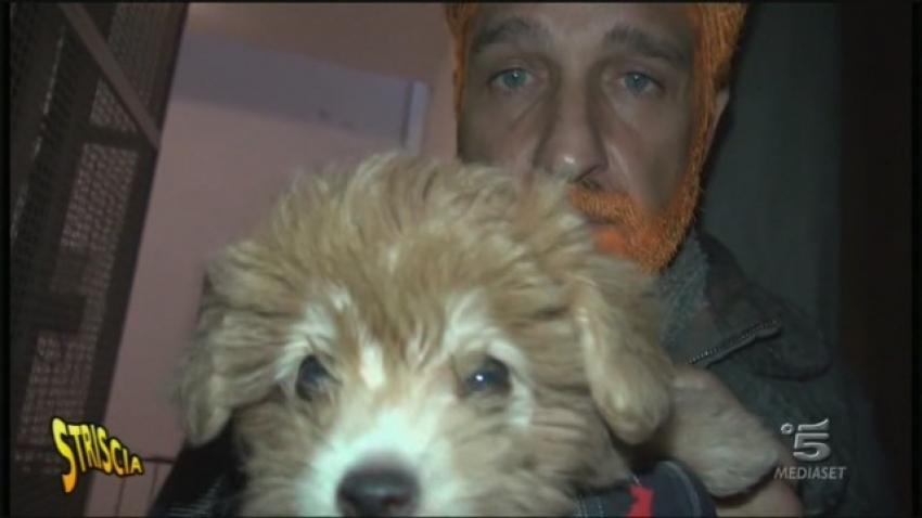 Traffico illegale di cuccioli di cane: venivano tinti prima di essere venduti
